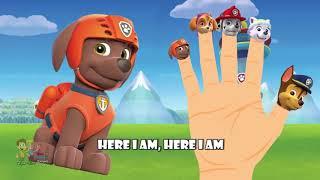 Pororo Finger Family | Nursery Rhymes | Animation From TanggoKids Nursery Rhymes
