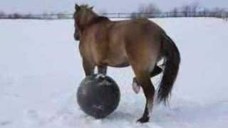 Skyy dancing with ball  (horse + snow + exercise ball)
