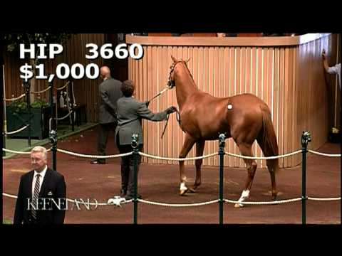 2012 Derby & Preakness Winner I'll Have Another Selling at Keeneland