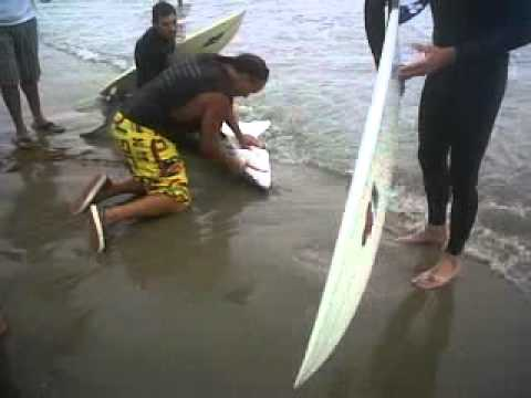 Baby Great White Shark Rescued in Venice Beach