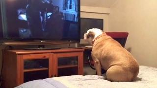 Šuns reakcija baisiausioje siaubo filmo scenoje nustebins