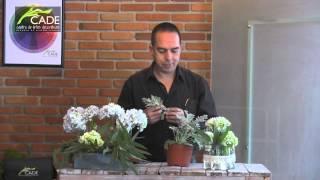 Cómo hacer 2 arreglos florales con hortensia para esta primavera - DIY hydrangea arrangement