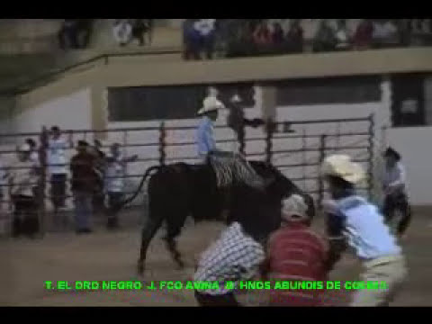 Toro El Oro Negro Vs Francisco Aviña.mp4
