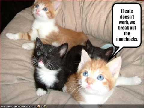 Very Funny Cats 45 - YouTube