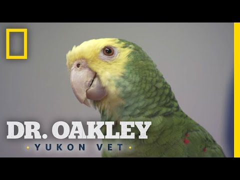 The Biting Bird | Dr. Oakley, Yukon Vet: Deleted Scene