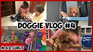 Daily Vlog #6 | Taking Doggie To A Petting Zoo + Vet Visit & Pet Store
