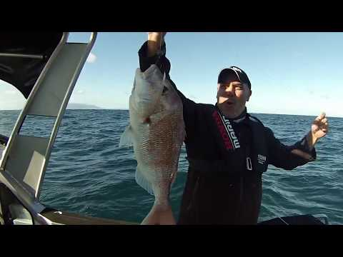 Reel Kiwi Fishing   - Straylining the Back of Tiri
