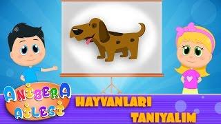 Anibera Ailesi | Hayvanları Tanıyalım  | Çocuk Masalları | Eğitici Videolar