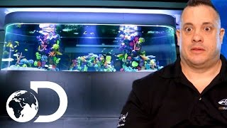 Trying to Install an 8000 Pound Fish Tank | Tanked