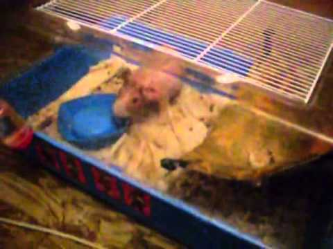 Hamster need for eat