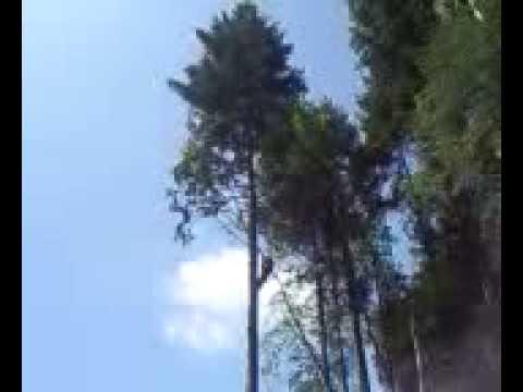 tree faller al bach from corwen!!