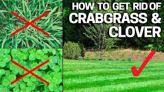 How to Get Rid of Crabgrass & Clover in the Lawn - Weed Control Like a Pro