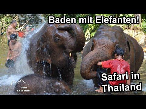 Beste Elefanten Safari in Chiang Mai, Thailand