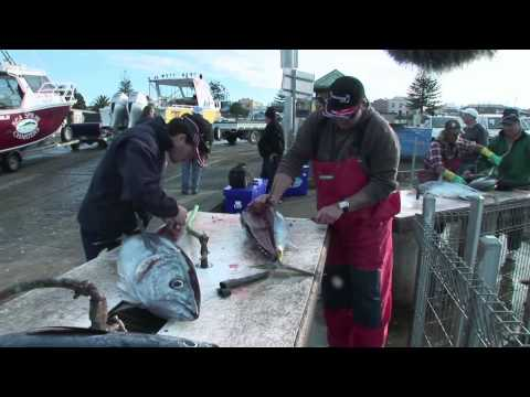 That's Fishing: Season 5 Episode 11 'Portland Tuna'