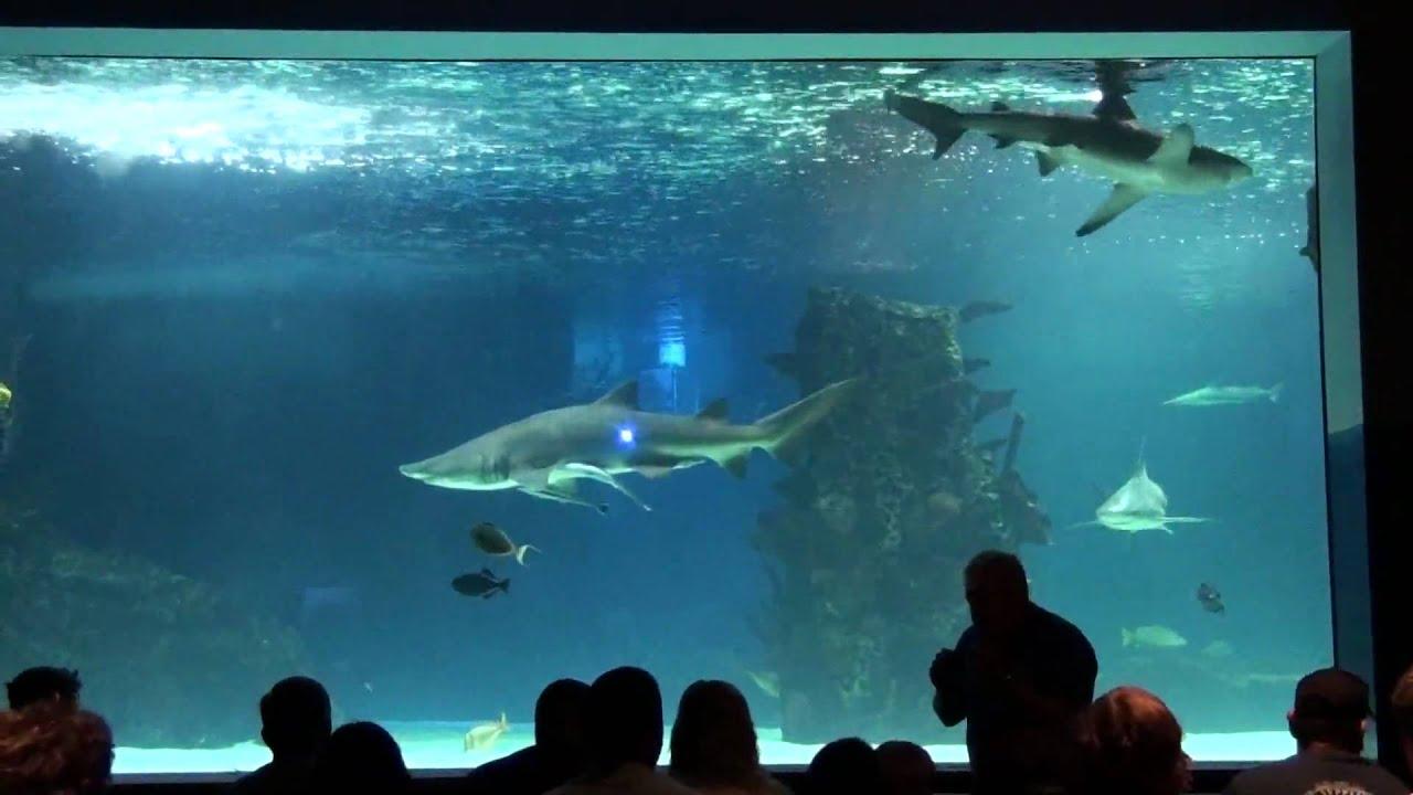 Newport Aquarium Trip 09 39 Newport Ky Part 7 Of 8