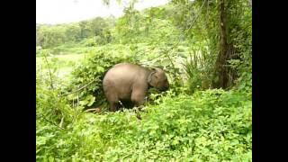 Funny Videos: Baby Elephants: Cute and Funny Elephants, Goofy Baby Elephant