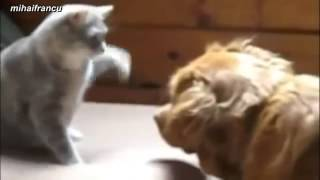 Cats Boxing Funny Compilation 2014 NEW