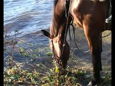 AdventureRide Equestrian Horseback Riding Vacation in Baltic States untouched nature