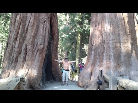 Southwest USA - Sequoia National Park