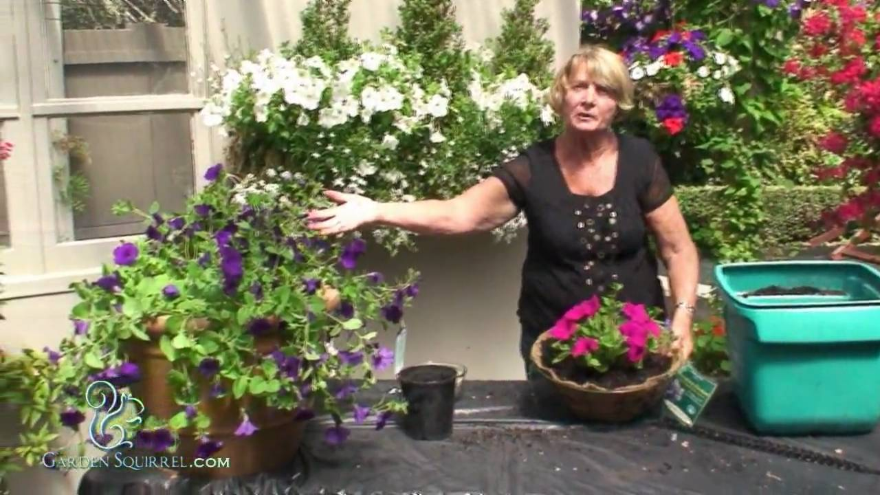 Youtube Hanging Flower Baskets : Hanging baskets easy coco