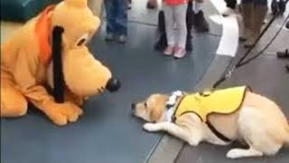 Funny Dogs and Cats - Lovely dog reaction when given a dog   WORLD PET TV