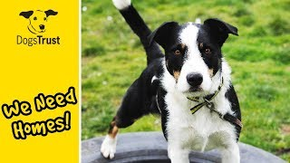 Our Dogs of the Week! | Can You Give Them a Home? | Dogs Trust