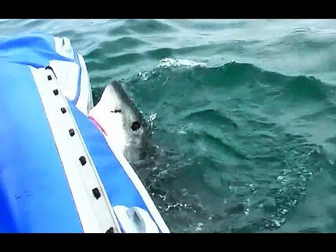 щука лодку утопила