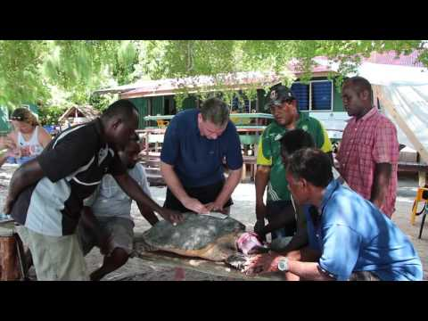 Tagging Hawksbill Sea Turtles in the Arnavon Islands