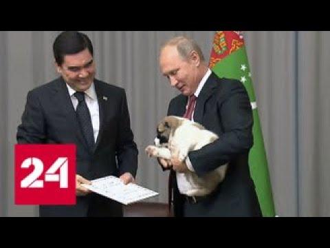 Факты: питомцы президента - Россия 24
