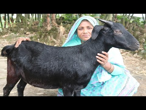 Full Goat Biryani Recipe Yummy Mutton Biryani Curry Traditional Goat Biryani Recipe Village Food