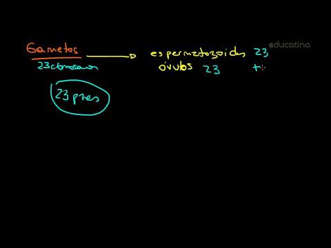 Introducción a la meiosis - Biología - Educatina