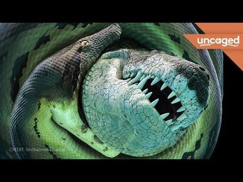 What weighed 900 pounds, was 16 feet long, and could kill you without even trying? Find out more here: http://www.livescience.com/46046-ancient-croc-lord-of-the-rings-balrog.html We're...