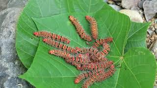 Chị Ấy Ăn Sâu Lông quá ghê Cooking big worm at river   Grilled Worm Eating delicious