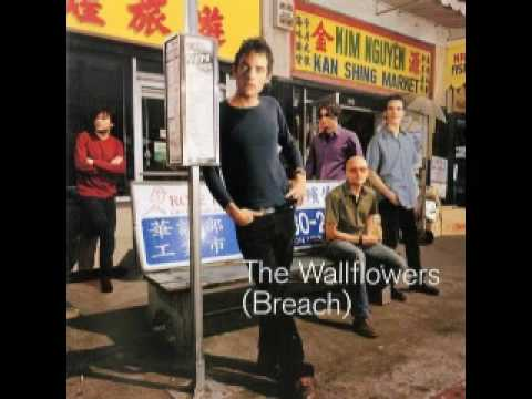 Wallflowers - Some Flowers Blooms Dead