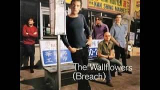 Watch Wallflowers Some Flowers Bloom Dead video