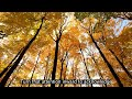 Mindful: A Meditation Series- Autumn Transition Guided Meditation