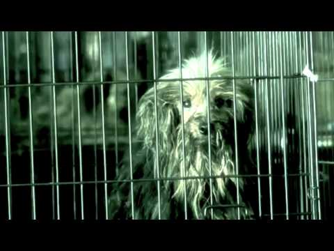 Animal Cruelty - The Humane Society of the United States