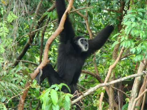 Save Nature and Wildlife Thailand.wmv