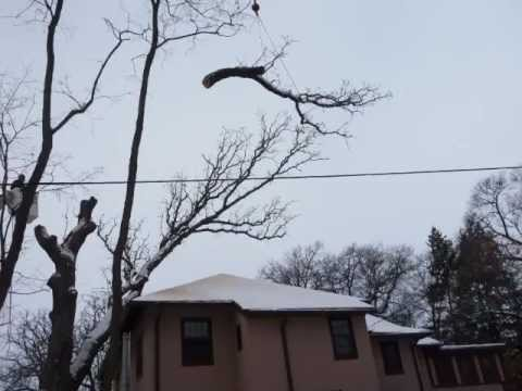 Arbor Systems Tree Removal Madison WI