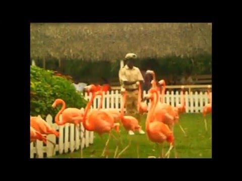 Adastra Gardens Lory Parrots & Flamingos: Bahamas, Nassau