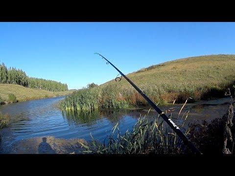 Рыбалка на спиннинг осенью. Дикие щурята атакуют!