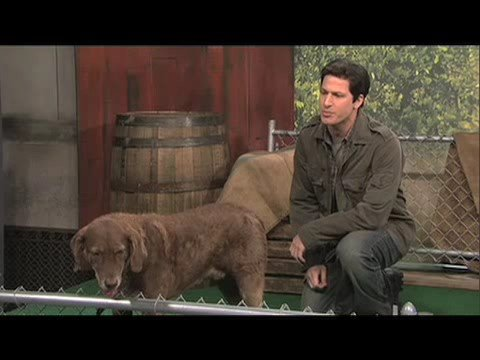 "Mark Wahlberg responds to SNL ""Talks to Animals"" Sketch!"