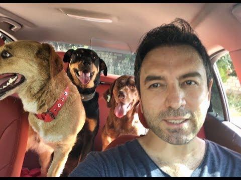 Köpeklerimiz Ponçik, Kadife ve Coni ile atladık arabaya sahilde bayram gezmesi yapıyoruz