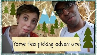 Tea-picking adventures in Yame