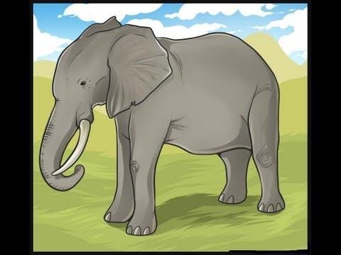 تعليم الرسم : تعلم كيف ترسم فيل + الخطوات