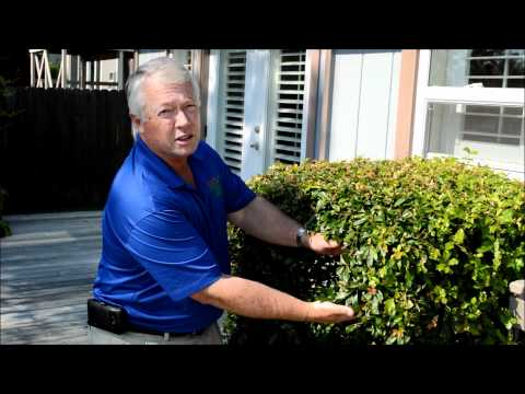 How Do I Get Rid Of Mosquitoes In My Yard How To Save