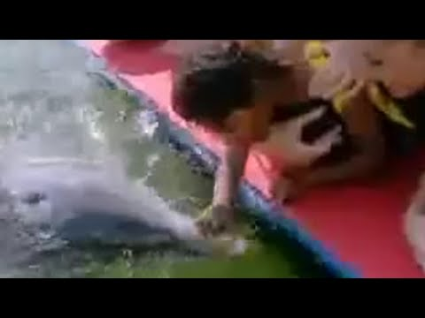 Girl swimming with dolphins - BBC