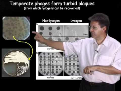 Graham Hatfull (University of Pittsburgh/HHMI) Part 1: Bacteriophages: What are they?