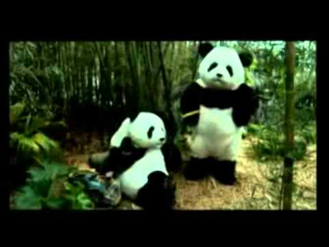 Los Osos Panda de Arnet - COMPLETO