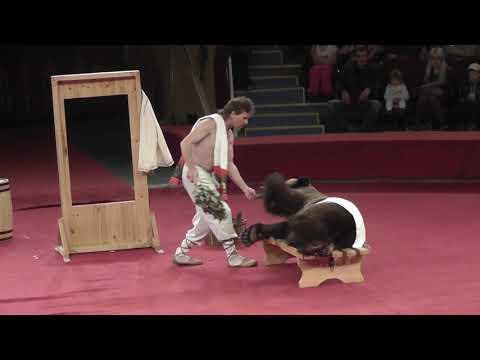 Баня с медведем. Цирк Никулина в Алматы.